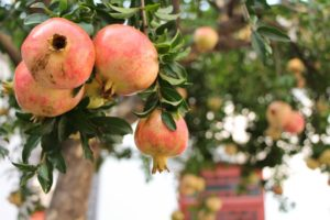pomegranate-989551_960_720-2